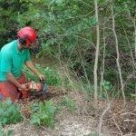 Buckthorn Eradication