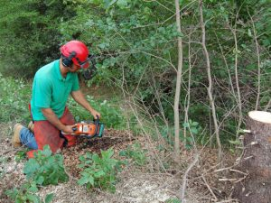 Buckthorn Eradication