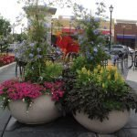 Annual Flower Containers