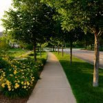 Boulevard Trees and Turf