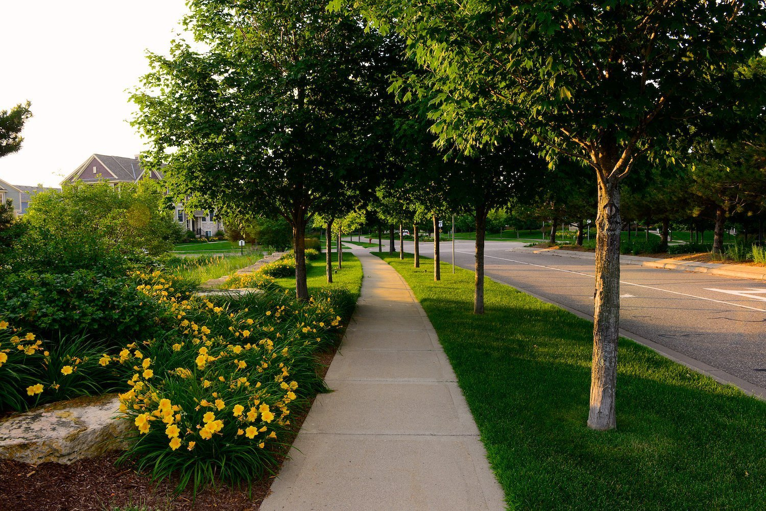 Landscape maintenance twin cities horticulture services for Tree and garden services