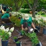 Island Planting