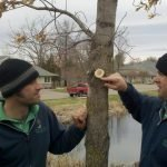 Tree Trimming Education