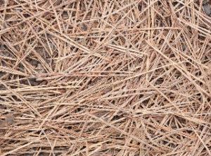 Mulch Pine Needles