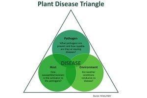 Plant disease triangle